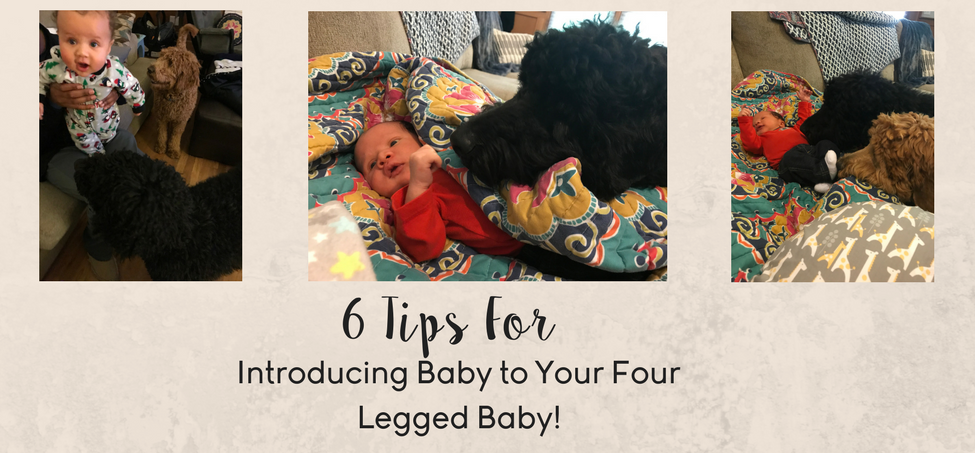 6 Tips For Introducing Baby to Your Four Legged Companion